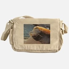 Sea Lion sunning itself Messenger Bag