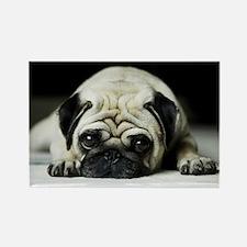 Pug Puppy Magnets