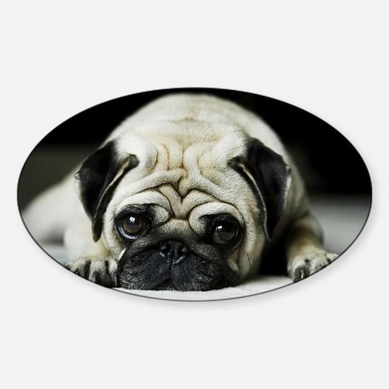 Pug Puppy Decal