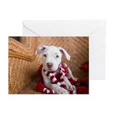 Holiday Greeting Cards (20)