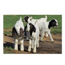 Unique Baby goat Postcards (Package of 8)