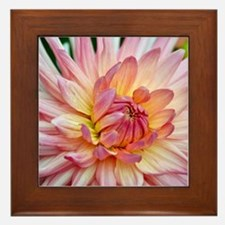 Beautiful pink dahlia Framed Tile