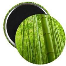 Bamboo Perspective Magnets