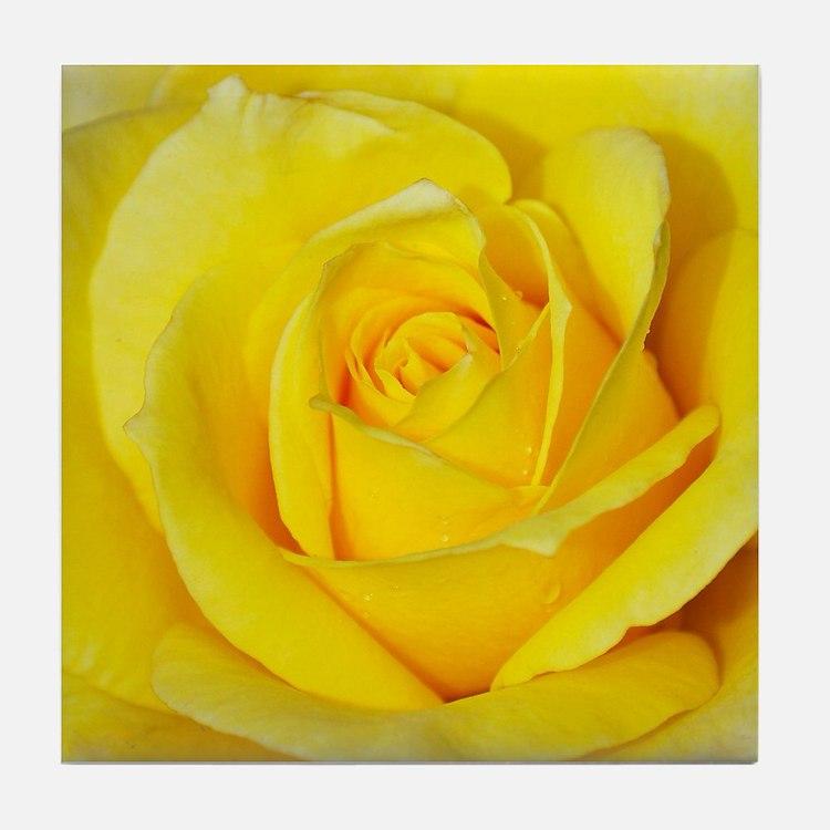 Beautiful single yellow rose Tile Coaster