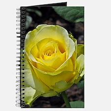 Singe yellow rose in sunlight Journal