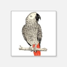 African Grey in Pencil Sticker