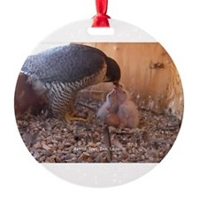 Cute Peregrine falcon Ornament