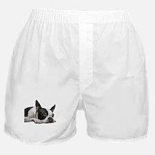 Unique Boston terrier Boxer Shorts