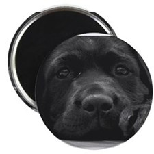 Unique Black lab Magnet