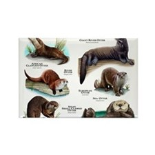 Otters of the World Rectangle Magnet