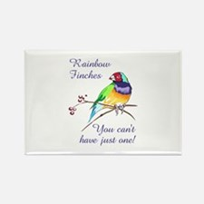 RAINBOW FINCHES Magnets