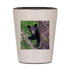 I SEE YOU - Baby Black Bear Shot Glass