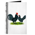 Blue Dutch Chickens Journal