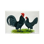 Blue Dutch Chickens Rectangle Magnet