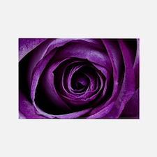 Purple Rose Flower Magnets