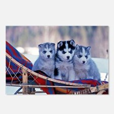 Husky Puppies Postcards (Package of 8)