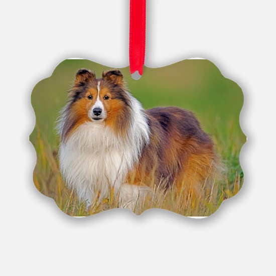 Shetland Sheepdog 01 Ornament