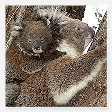 "Cute Australian koala mo Square Car Magnet 3"" x 3"""