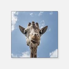 Cool Giraffe Sticker