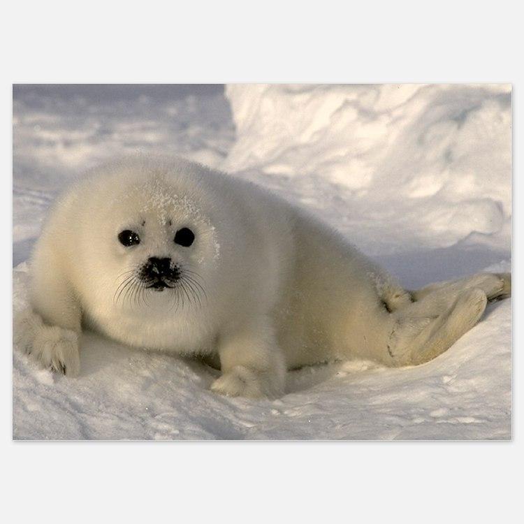Baby Seal Invitations