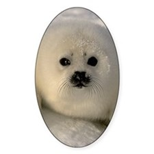 Baby Seal Decal