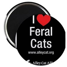 Cute Feral cats Magnet