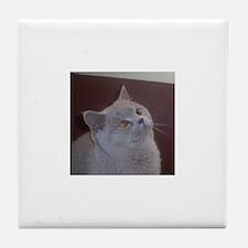 British Shorthair cat Tile Coaster
