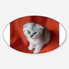 Scottish Fold Decal