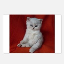 British Shorthair kitten Postcards (Package of 8)