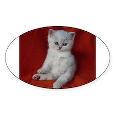 British Shorthair kitten Decal