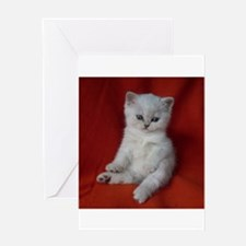 British Shorthair kitten Greeting Cards