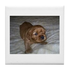 Ruby puppy Tile Coaster
