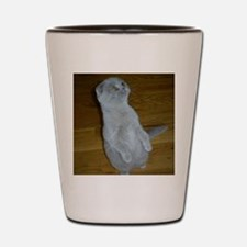 Cute Scottish fold Shot Glass