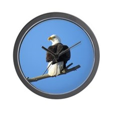 White tail Eagle Wall Clock