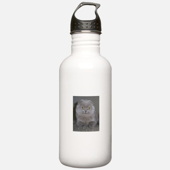 lilac Scottish Fold ca Water Bottle