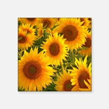 "Field of Sunflowers Square Sticker 3"" x 3"""