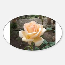 Rose in Andalusian garden, Rabat, Morocco Decal