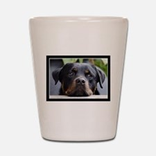 Rottweiler Dog Shot Glass