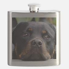 Rottweiler Dog Flask