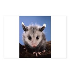 Cute Opossum Postcards (Package of 8)