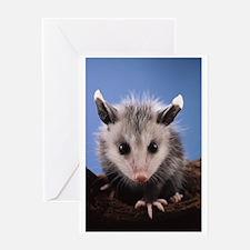 Cute Opossum Greeting Cards
