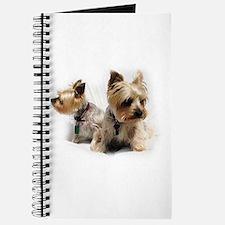 Silky Terriers Journal