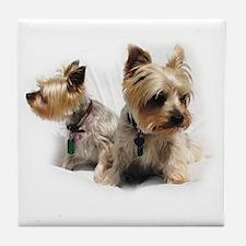 Silky Terriers Tile Coaster