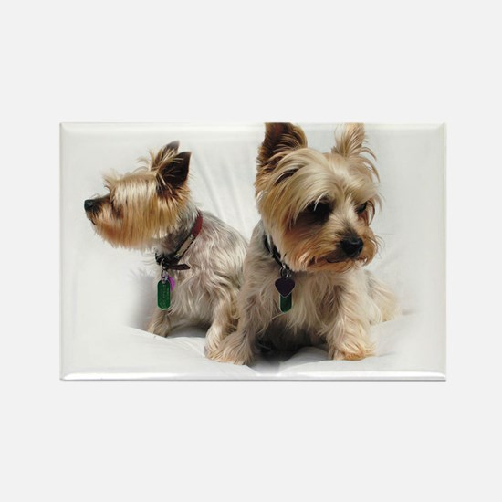 Silky Terriers Magnets