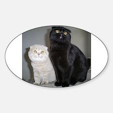 Scottish Fold cat and kitten Decal