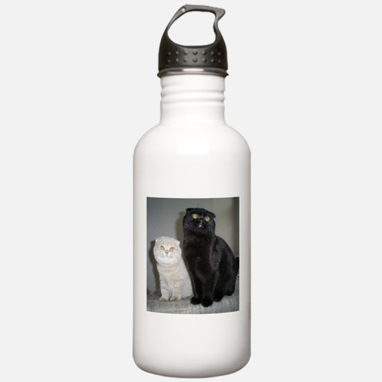 Scottish Fold cat and Water Bottle