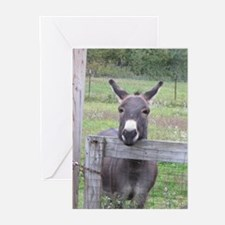 Miniature Donkey II Greeting Cards
