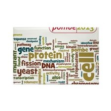 Cute 2013 Rectangle Magnet (10 pack)