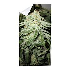 Marijuana Plant Beach Towel