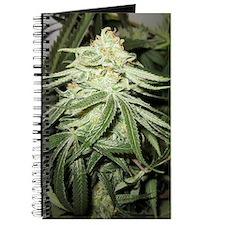 Marijuana Plant Journal